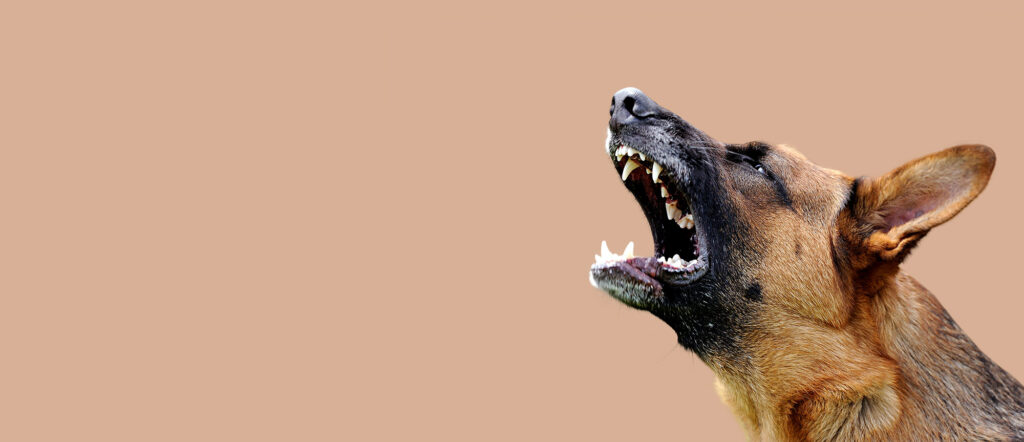 dangerous dog bite attack personal injury solicitors Aberdeen