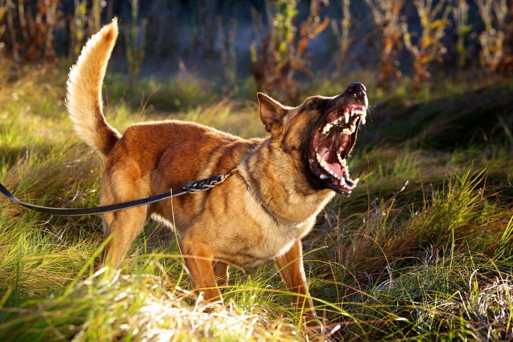 Dog Attack, Animal Bites - Poorly trained pets, bad dog, dangerous animals
